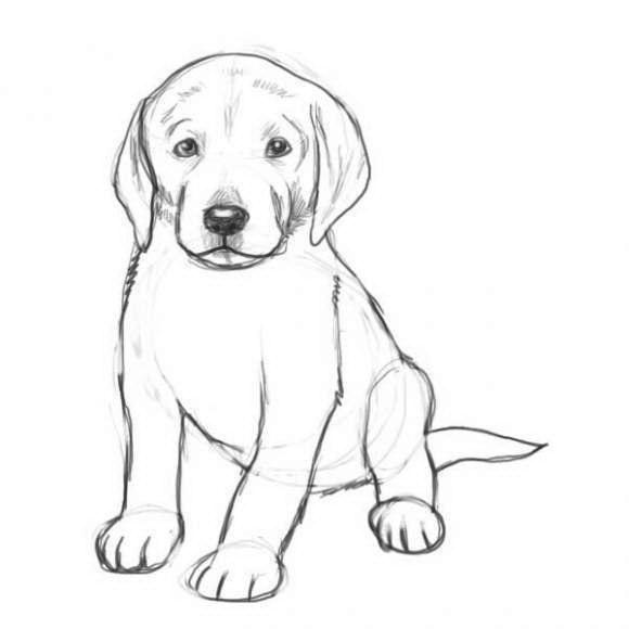 Как рисовать собак карандашом поэтапно - Purmix ru